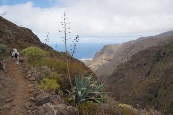 Agave Deserti - Canaries