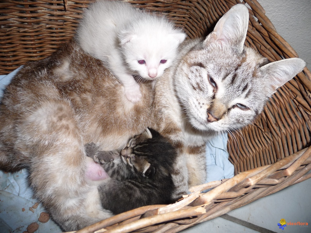 Photo Bebe Chats Et Maman
