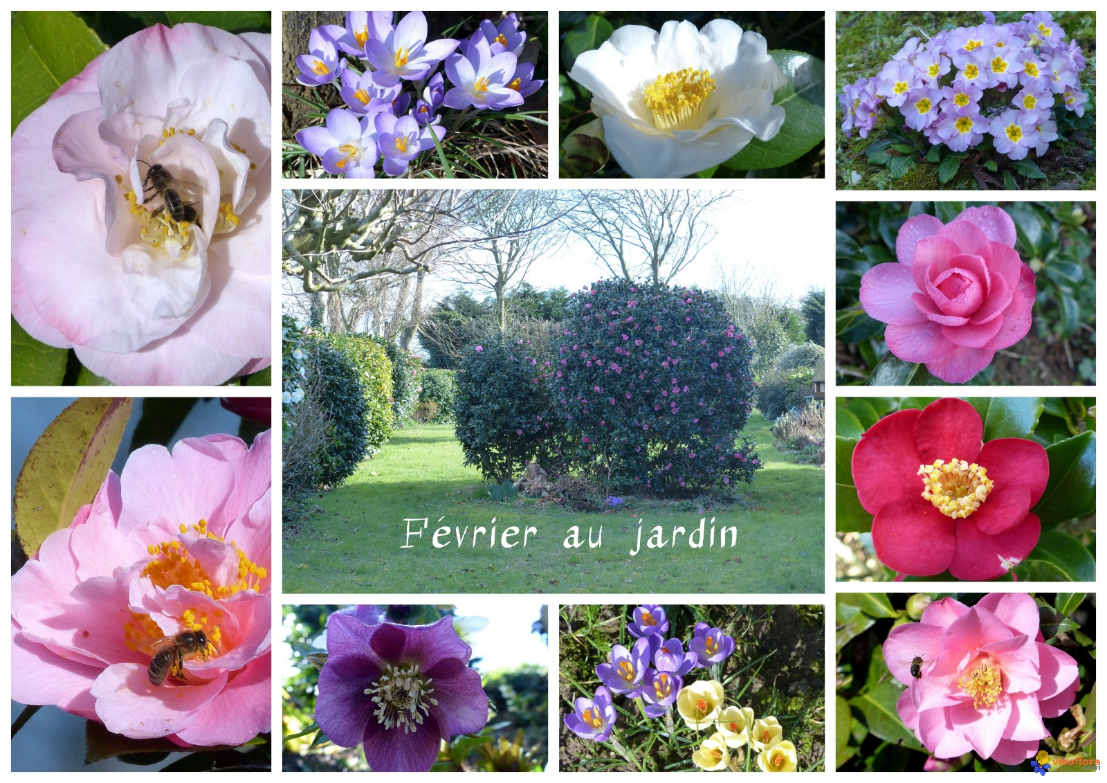 Photo f vrier au jardin for Jardin fevrier
