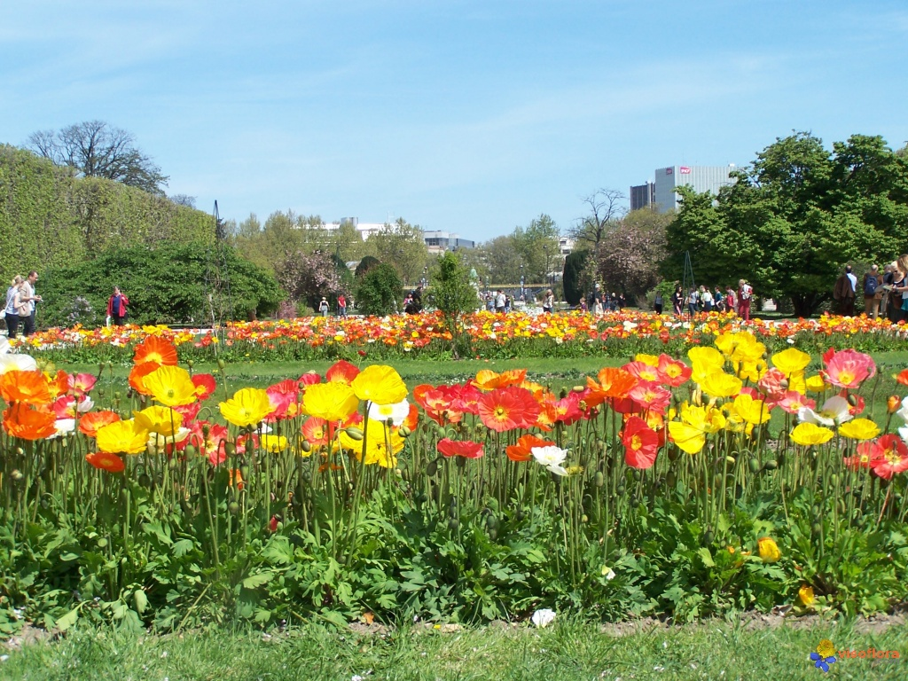 Photo jardin des plantes for Plante verte de jardin