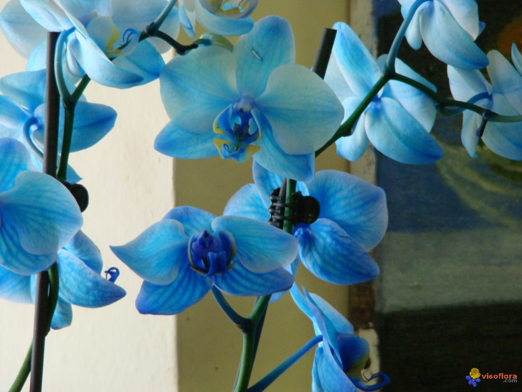 orchidee couleur