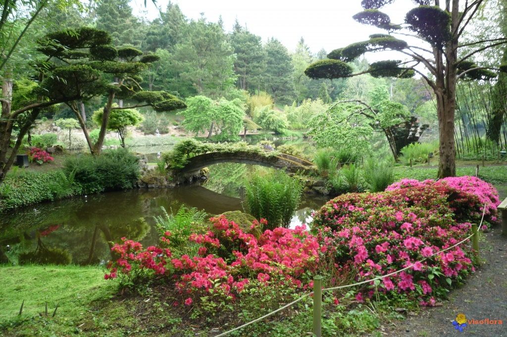 Photo parc oriental de maul vrier 49 for Jardin japonais cholet