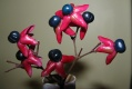 Clerodendrum trichotomum-fruits
