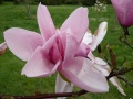 Magnolia Star Wars (3)